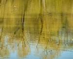 Spiegelungen im kleinen Teich im Park