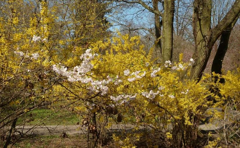 Frühling im Stadtpark von Nürnberg