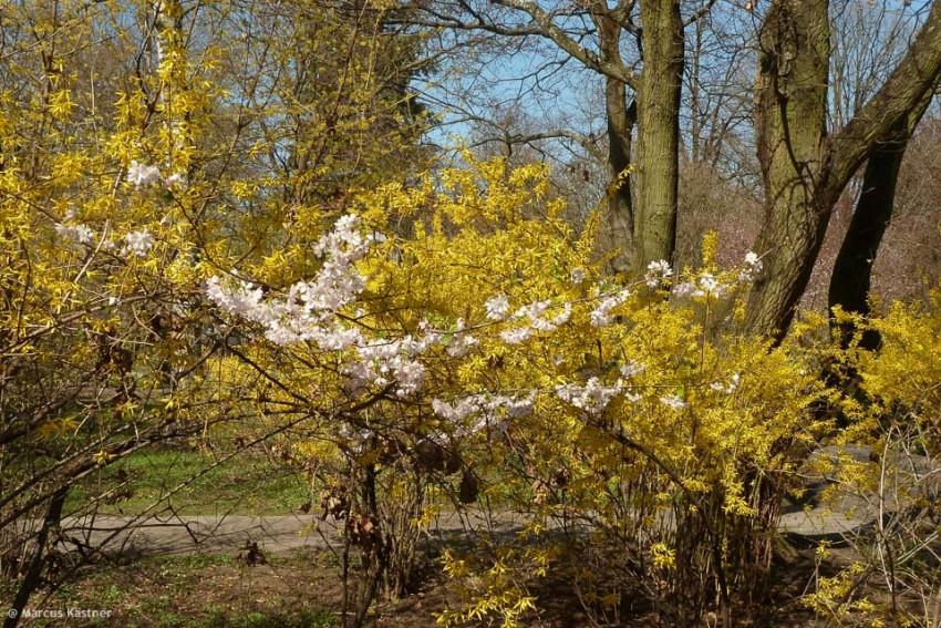 Frühling im Nürnberger Stadtpark