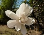 oder auch mal eine weiße Blüte