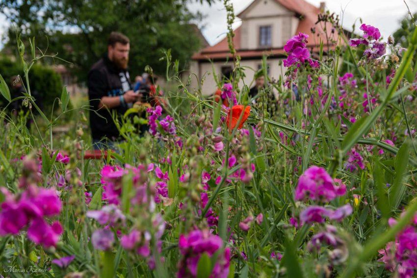 Garten mit den Instagram-Fotografen im Hintergrund